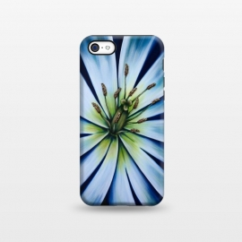iPhone 5C  Blue Tulip Flower by Denise Cassidy Wood