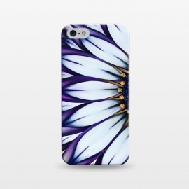 iPhone 5/5E/5s  Wild African Daisy by Denise Cassidy Wood