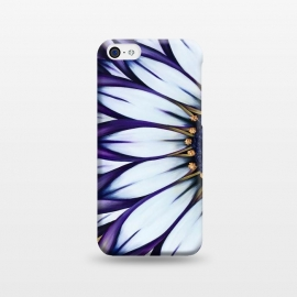iPhone 5C  Wild African Daisy by Denise Cassidy Wood