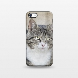 iPhone 5C  Friendly Cat Mixed Media Art by Andrea Haase