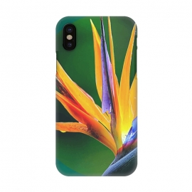 iPhone X  Bird of Paradise by Creativeaxle
