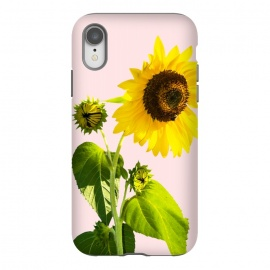 iPhone Xr  Sun Flower v2 by  (realism, photo sun flower, floral, nature, summer, summy, exotic, blossom)