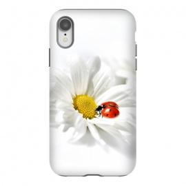 iPhone Xr  Daisy flower & Ladybug by